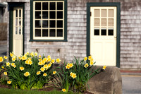 Siasconset Rotary and Sconset Cafe with Daffodils (CH)